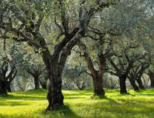 Cooperativas agroalimentarias: retos de gestión en el momento actual